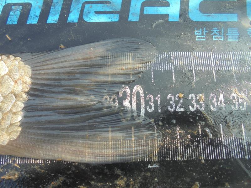 꾸미기_2DSC04488.JPG
