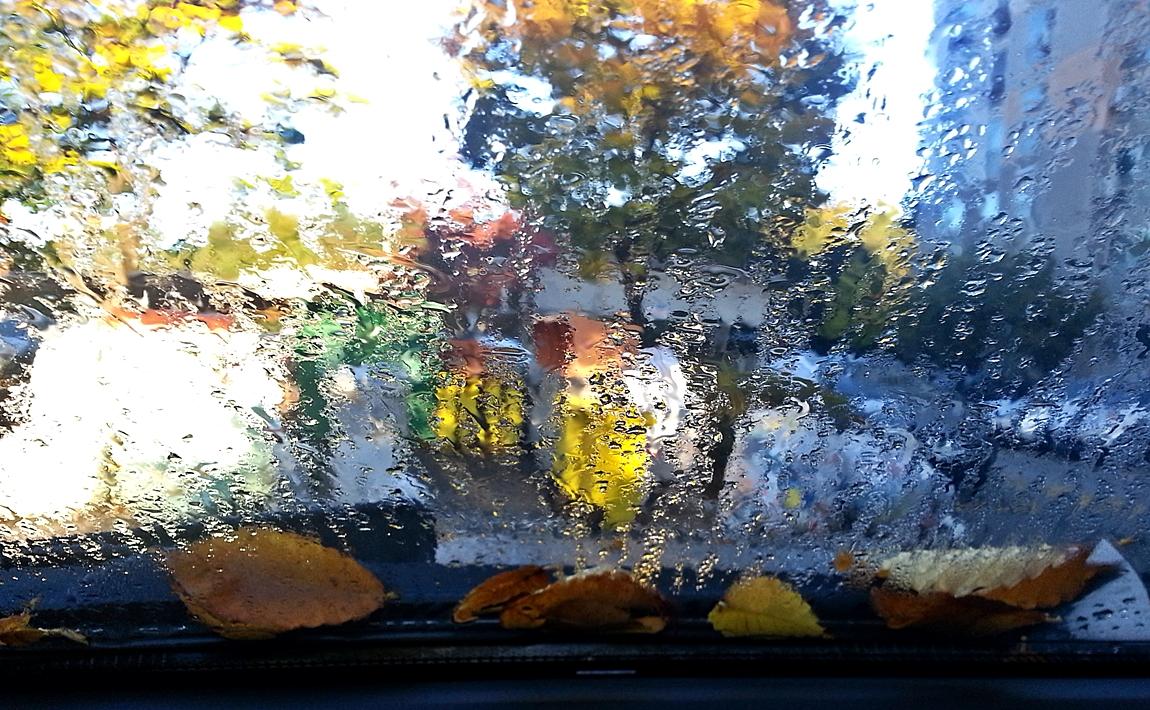 핸폰 낙엽그림입니다 044AAAAAAAAAAAAAA.jpg