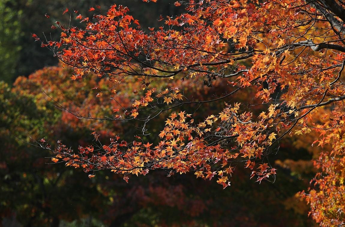 11월6일 가을...둘.JPG