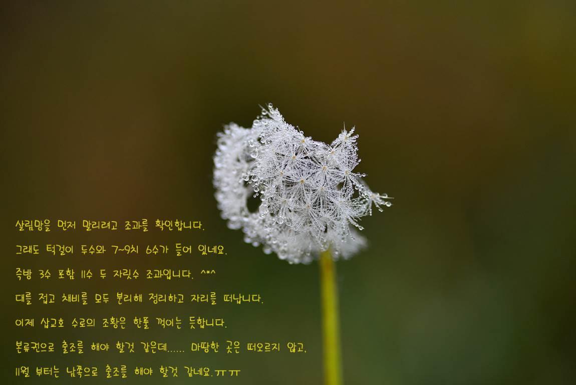 19C_5484-5405s.jpg