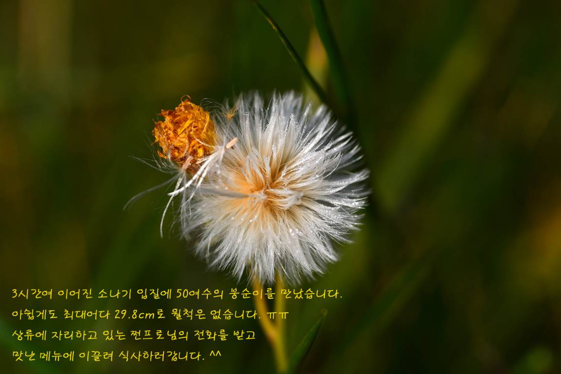 19C_5552a.jpg